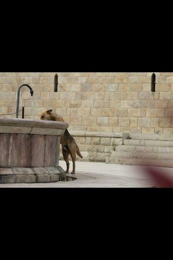 Dog Drinkinwater Cute Beauty