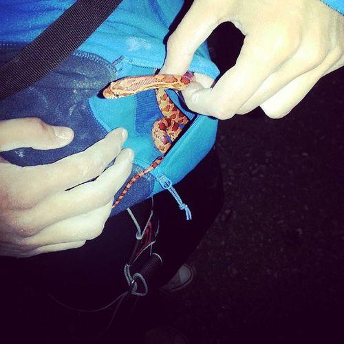 Вот такое милое создание было сегодня с нами на треничке?☺ Kharkiv Evening Snake Climbingwall скалодром