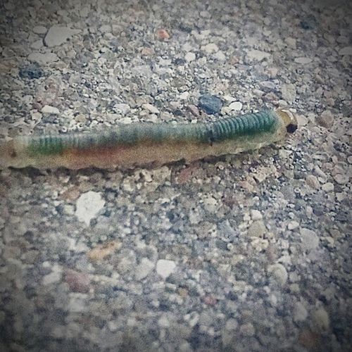 Beautiful caterpillar Animals In The Wild Animal Wildlife Outdoors First Eyeem Photo