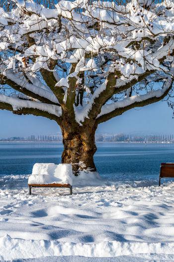 Tree by frozen sea against sky