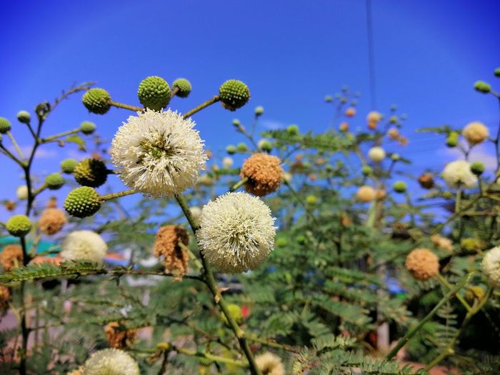 Close-up of flowering plants against clear sky