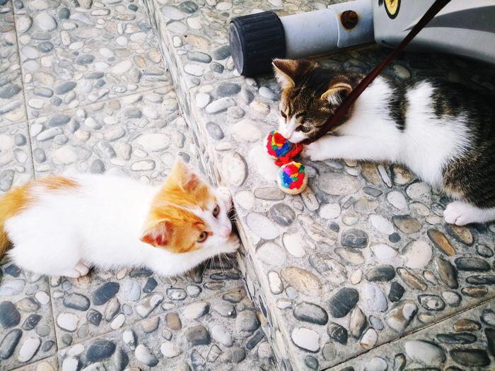 Kittens Kittens Playing Orange Cat Orange Kitten Cute Pets Cute EyeEm Selects Pets Feline Domestic Cat High Angle View Cat Kitten Young Animal Whisker