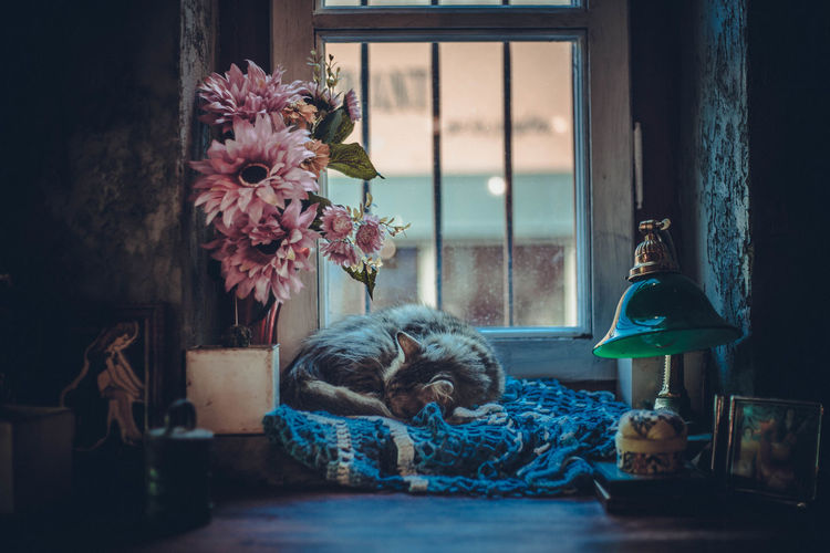 Cat sleeping by vase against window at home