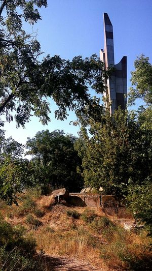 Tree Architecture Built Structure Day Sky Nature Крым Крым, Россия
