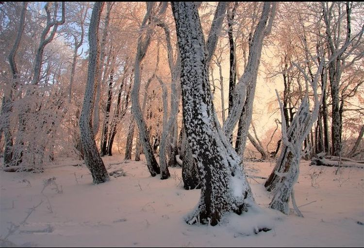 Hiver Neige Blanc Froid Nature