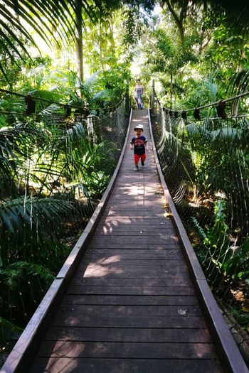 Running in the jungle with Mummy Running Little Boy Perth Zoo Me And Munmy Outdoors Tree Full Length Footbridge Men Walking Rear View Forest Rope Bridge