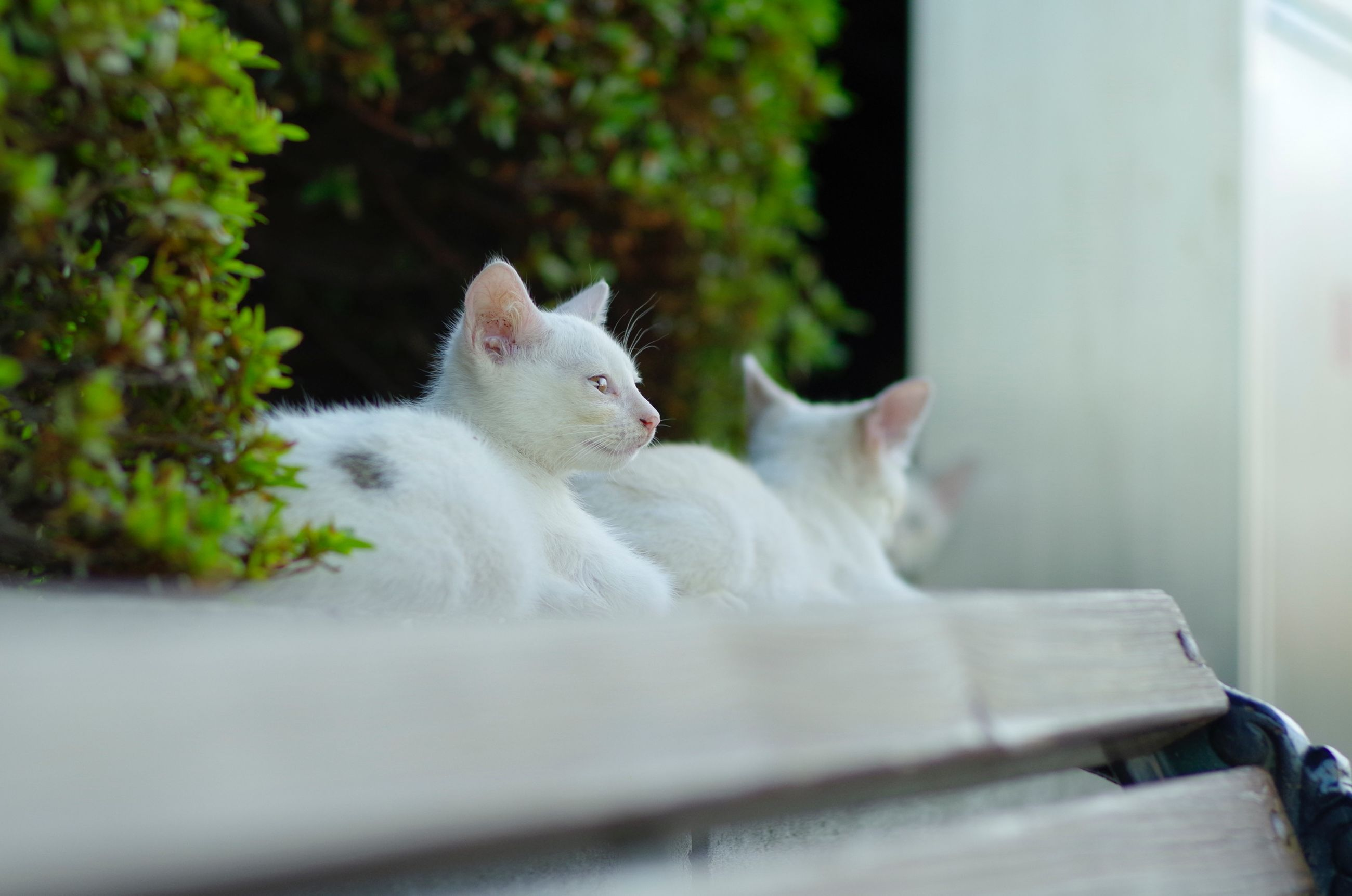domestic cat, cat, pets, domestic animals, animal themes, one animal, feline, mammal, whisker, relaxation, white color, indoors, potted plant, sitting, selective focus, resting, close-up, no people, plant, lying down