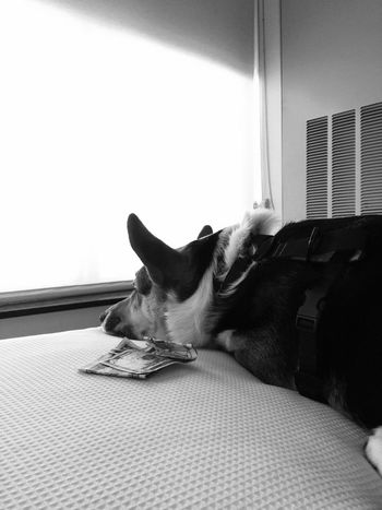 Frodo wondering how to spend his money on our staycation. ;)