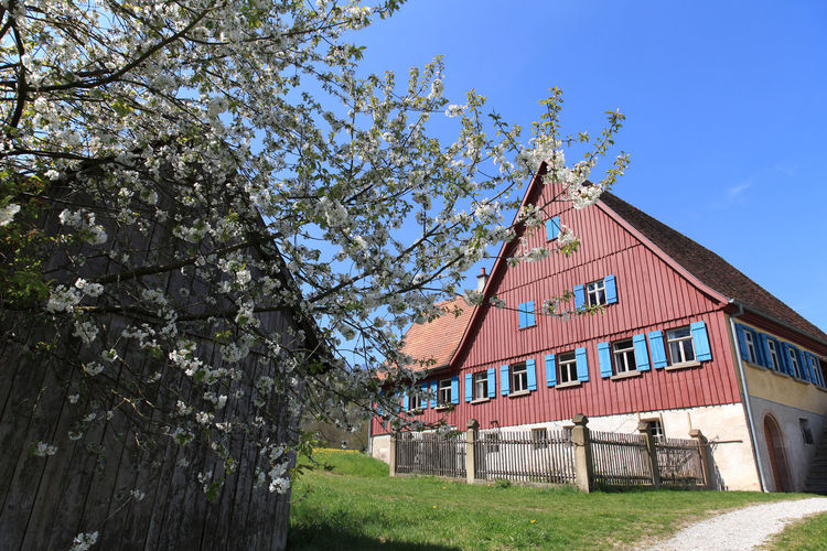 Old farm house with blossoming apple tree Agriculture Country Apple Tree Architecture Beauty In Nature Blossom Building Building Exterior Built Structure Cherry Blossom Clear Sky Day Farm House Flower Grass Growth House Low Angle View Nature No People Outdoors Plant Sky Springtime Tree