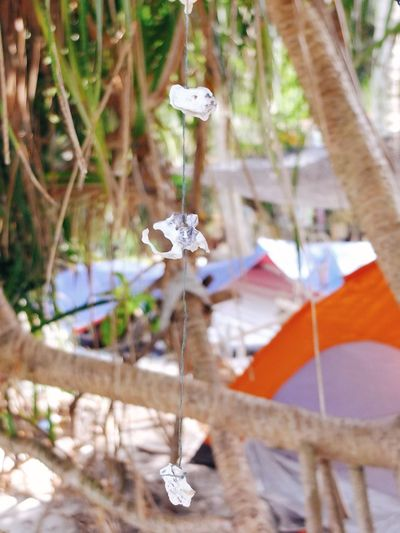 Monkey Beach Penang Surfer Boys  Camping Beachcamp Hanging No People Focus On Foreground Close-up Day Outdoors Tree