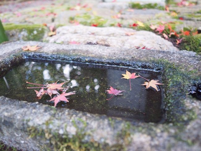 Kyoto Japan Kouetsuji Autumn Momiji Autumn Colors Autumn Leaves Leaves Water Beauty In Nature Olympus PEN-F 京都 日本 光悦寺 寺 紅葉 秋 葉 水 もみじ