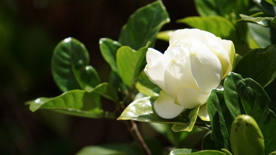Plant Flower Flowering Plant Growth Freshness Beauty In Nature White Color