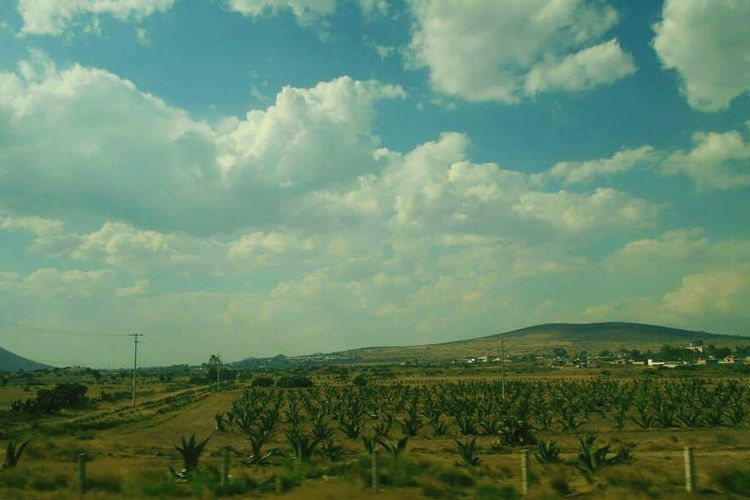 Mountains In Background Rural Mexico Hills On Way To Mexico City Trees Fields White Clouds Blue Sky Grass Sky Green Mexico Rural Scenes Nature Nature_collection Rural Collection Travel In Mexico On The Road Ranch Life Travel Photography Maguey Lines