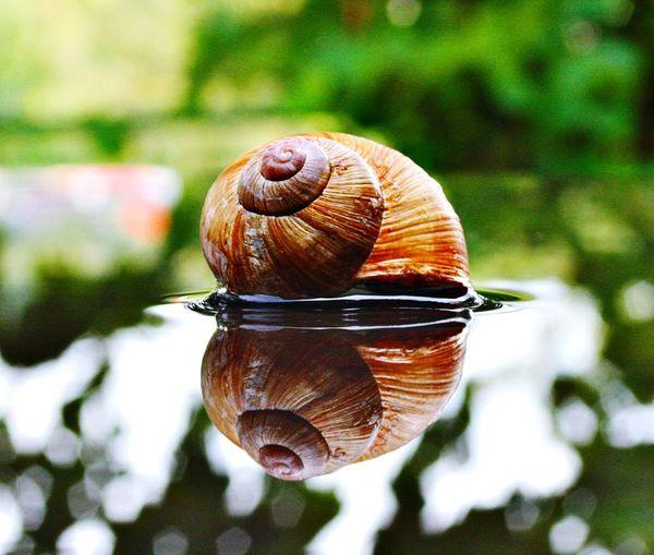 Snailhouse in focus #spiegelung #effect #wasserspiegelung #schneckenhaus Gastropod Close-up Spiral Slug