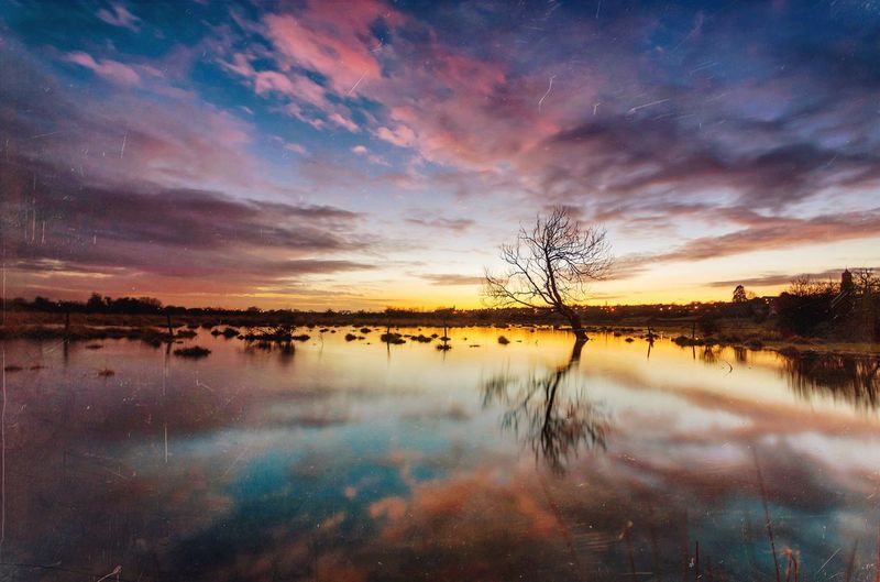 Above & Below | Out of the ground, Into the sky, Out of the sky, Into the dirt, Tree Lonely Tree Water Reflections Reflections Reflected Sky The Great Outdoors With Adobe Sky And Clouds Skyporn Sunset Tree And Sky Tree And Sunset Flood Waterscape Reflected Trees Beautiful Nature Lake View Sky And Trees Sky And Water Dusk Sky The Essence Of Summer Northamptonshire Water Landscape Tree Landscape Sunset Landscape The Great Outdoors - 2016 EyeEm Awards