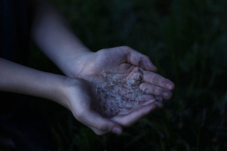 Cropped Hands Holding Dandelion Seeds At Night
