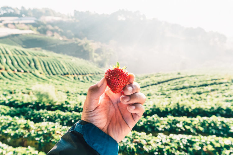 Beauty In Nature Color Image Cropped Day Dessert Focus On Foreground Food Food And Drink Freshness Fruit Holding Indulgence Leisure Activity Lifestyles Mountain Nature Outdoors Part Of Person Personal Perspective Ready-to-eat Red Strawberry