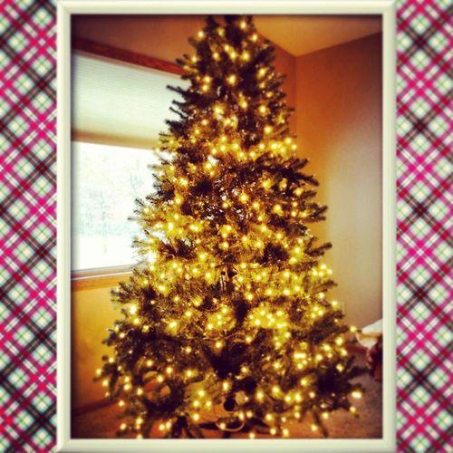 Christmasspirit Christmastree Myfavoritetimeofyear Harrydontlookatthelight