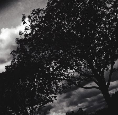 MCALESTER,OKLAHOMA Tree Low Angle View Outdoors Monochrome black and white