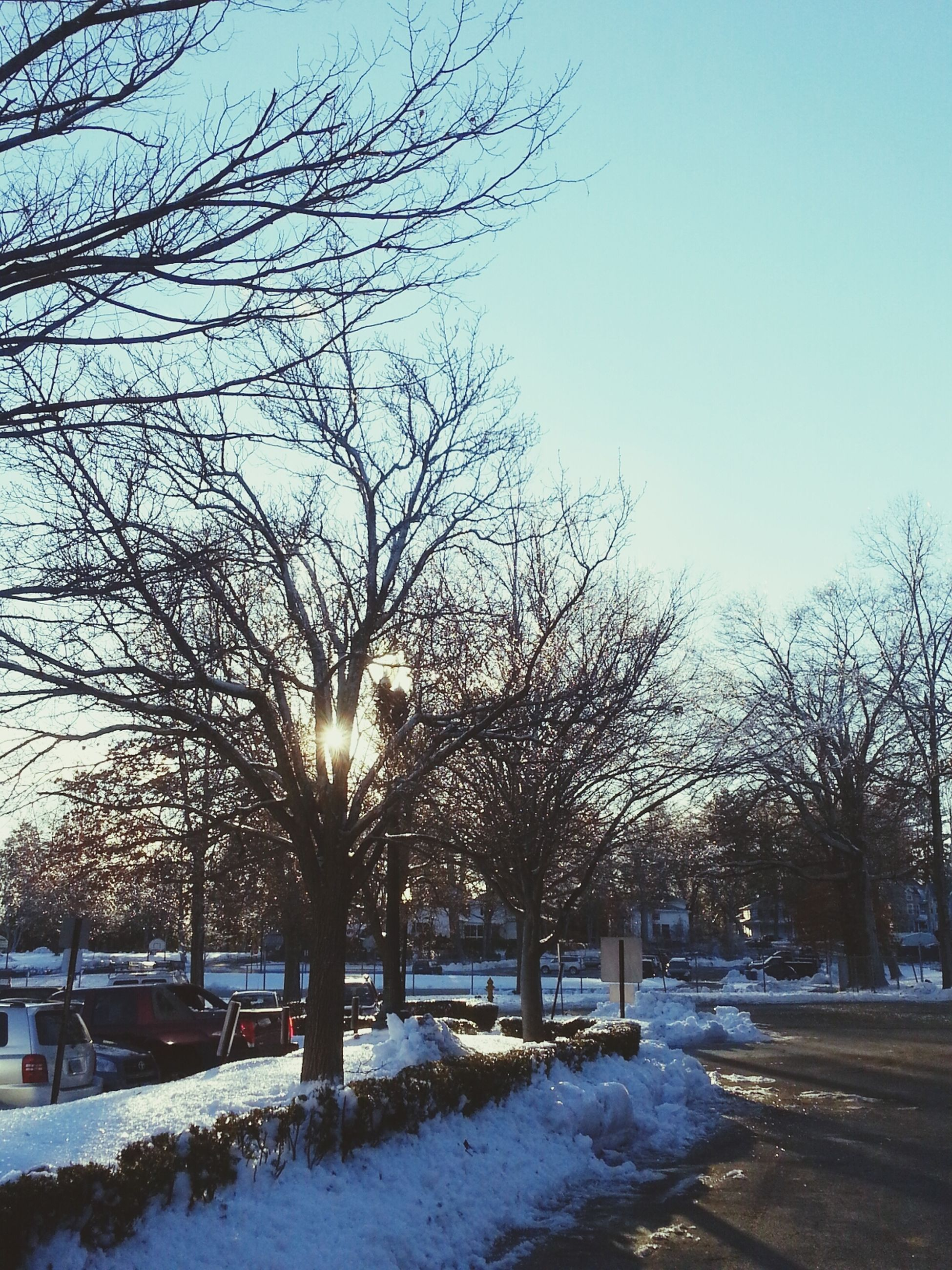 snow, winter, cold temperature, bare tree, tree, season, clear sky, branch, weather, nature, tranquility, covering, tranquil scene, landscape, beauty in nature, scenics, field, frozen, sky, blue
