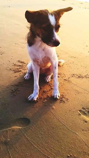 Friendly dog Dog