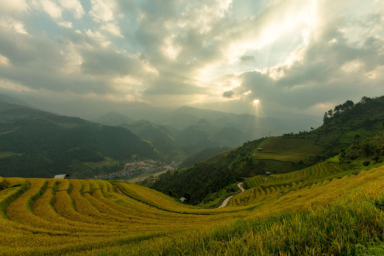 Vietnamese rice field on terraced and cloudy in Mu Cang Chai Vietnam. Cloud - Sky Scenics - Nature Beauty In Nature Landscape Sky Environment Tranquil Scene Mountain Tranquility Field Plant Land Rural Scene Nature Green Color Agriculture No People Growth Mountain Range Outdoors Rice Terraced Field Vietnam Vietnamese Asian  Aerial View Curve Food Clouds And Sky Nature Travel Tourism Landmark Yellow The Traveler - 2019 EyeEm Awards