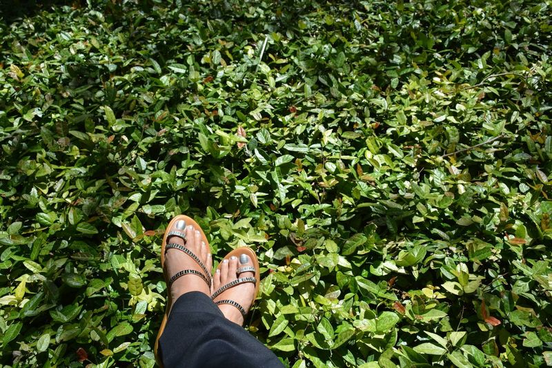 resting among the green Green Color One Woman Only Leisure Activity Outdoors Nature Real People Human Body Part Women Lifestyles One Person Personal Perspective Low Section Ground Cover Groundcover Sandals Bling Sparkle Female Footwear Personal Style Feet Fashion Green Leaves Rhinestones Footselfie Place Of Heart