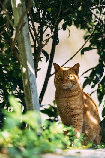 Waiting Cat