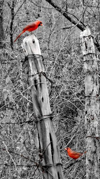 High Angle View No People Outdoors Animal Themes Day Birds Bird Bird Photography Birds_collection Birds Of EyeEm  Birds🐦⛅ Nature Beauty In Nature Animals In The Wild Animal Wildlife Flock Of Birds Coahuila Coahuila, México