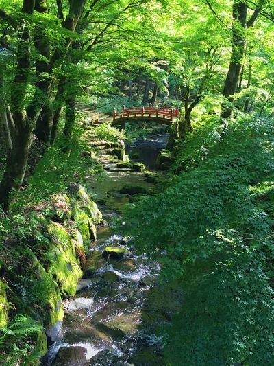 River Enjoying Life Hello World Bridge