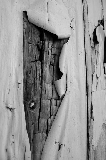 Aging Backgrounds Black And White Black And White Photography Close-up Day Decay Decaying Forgotten Garden Natural Neglect Neglected No People Outdoors Rot Rotting Rotting Wood Textured  Unloved Wood Wood - Material