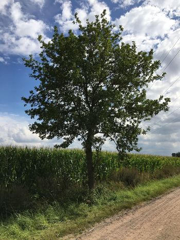 Tree Landscape Field Nature Single Tree Scenics Beauty In Nature Tranquil Scene Green Color Countryside
