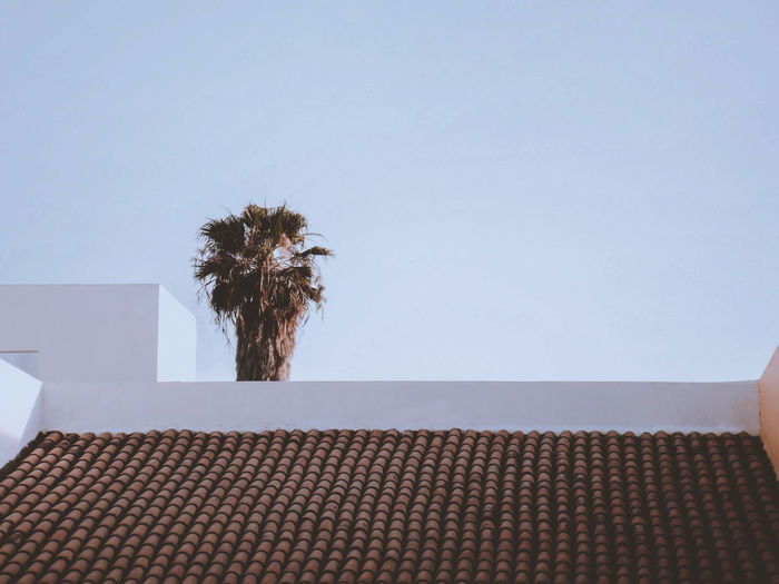 Tropical Climate Minimalist Architecture Palm Tree Architecture Building Building Exterior Built Structure Clear Sky Copy Space Day Geometry House Low Angle View Minimalism Nature No People Outdoors Palm Tree Plant Roof Roof Tile Sky Tree Tropical Tropical Climate The Great Outdoors - 2018 EyeEm Awards The Architect - 2018 EyeEm Awards EyeEmNewHere
