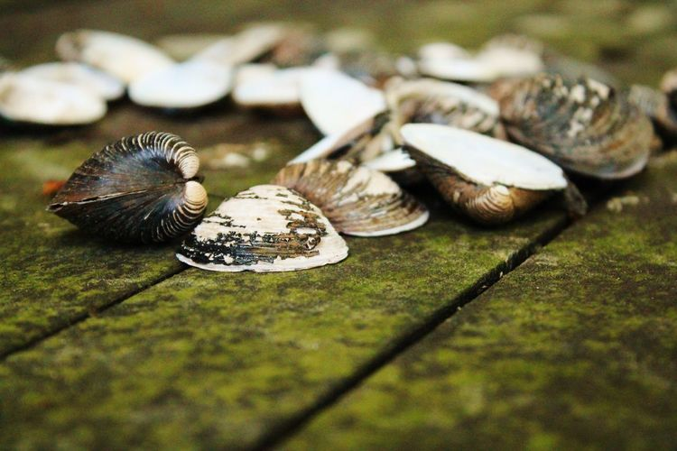 Close-up of clams on jetty
