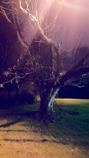 Country Living Sunnyday☀️ Abstractart Tree_collection  Tree Life Tree Art City 2.0 - The Future Of The City TreePorn Tree Love❤ Sky Love❤ Cloud Tree Kiss Tree Planting