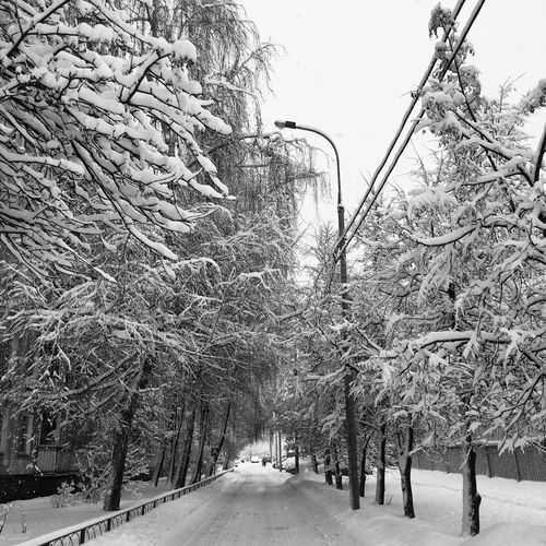 To be continued... Tree Plant Snow Cold Temperature Winter Nature Sky Day Street No People Frozen Beauty In Nature