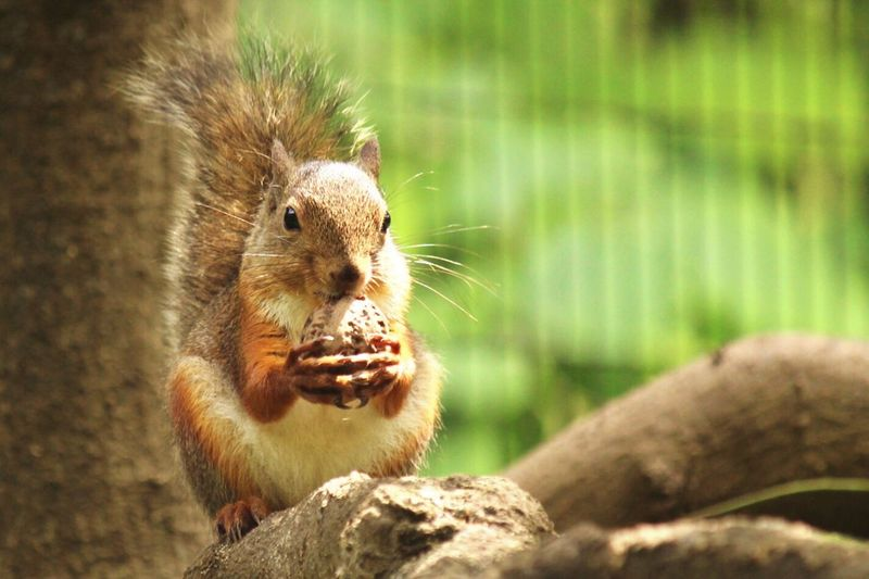 Squirrel holding nut during sunny day