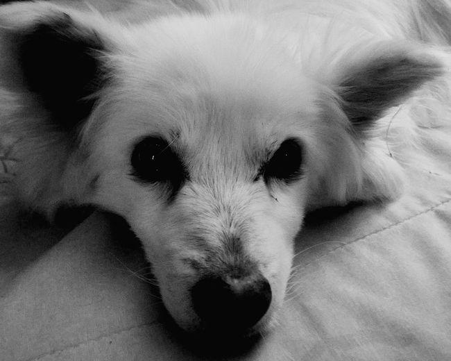 Dogstagram Doglife Doglovers Dogslife Dog Lover Relaxing DogLove Relaxing Dog Dogs Dog❤ Doggie Dog Life Dog Days Doglover Enjoying Life Dogs Of EyeEm Dogoftheday Dog Sleeping  Adorable Dog Adorable Dog Love Doggy