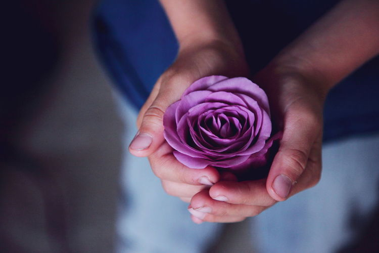 Midsection of person holding purple rose