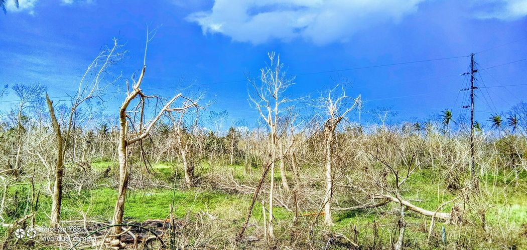 After #OmpongPH, this is what happened in our Municipality here at it is hard to see my place suffer things like were risks and our livelihood faced we are Filipinos, there is nothing we can't go through! #ompongPH Devastationfromtyphoon Cagayanvalley Water Blue Sky Grass Plant