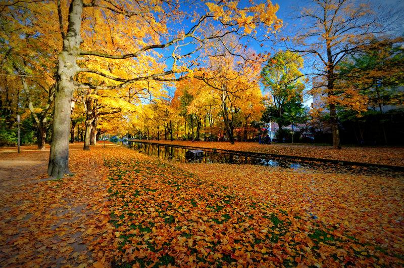Autumn Autumn Colors Autumn Leaves Outdoors Park Rautenstrauchkanalköln Tree