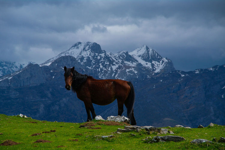 Horse in Picos de EuropaThe Great Outdoors - 2017 EyeEm Awards Horse Picos De Europa Mountains Nature Animal Wildlife Landscape Best EyeEm Shot Beauty In Nature Asturias SPAIN