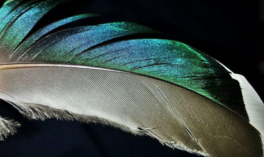 Feather  Colorful Piuma ❤️ Colors Pluma Plumage Taking Photos Nofilter