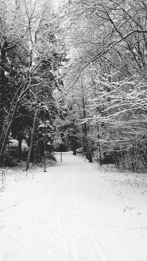 winter comes and goes . Wintertime Beautiful Walking Around