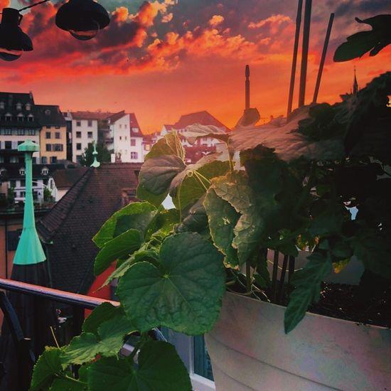 Built Structure Architecture Plant Leaf Plant Part Cloud - Sky Outdoors Beauty In Nature Building Sky Sunset