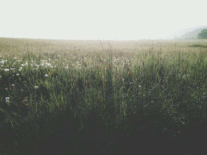 2016 2k16 Summer2016 May 2016 Summer ☀ May Flowers Grassland Grasslands Morning Flower Morning Flowers Summertime Summer Morning Summer Summer Views Grass Green Color Green Fog Foggy Foggy Morning Foggy Grassland Foggy Grasslands