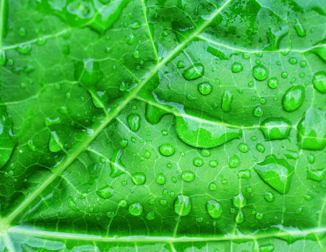Green Color Wet