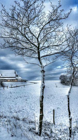 Winter Trees Winterwonderland EyeEm Nature Lover Snow Day ❄
