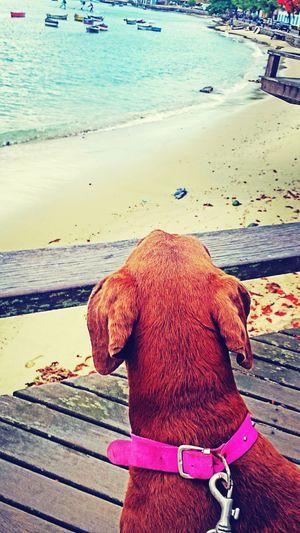 Buzios Dog Dog Love