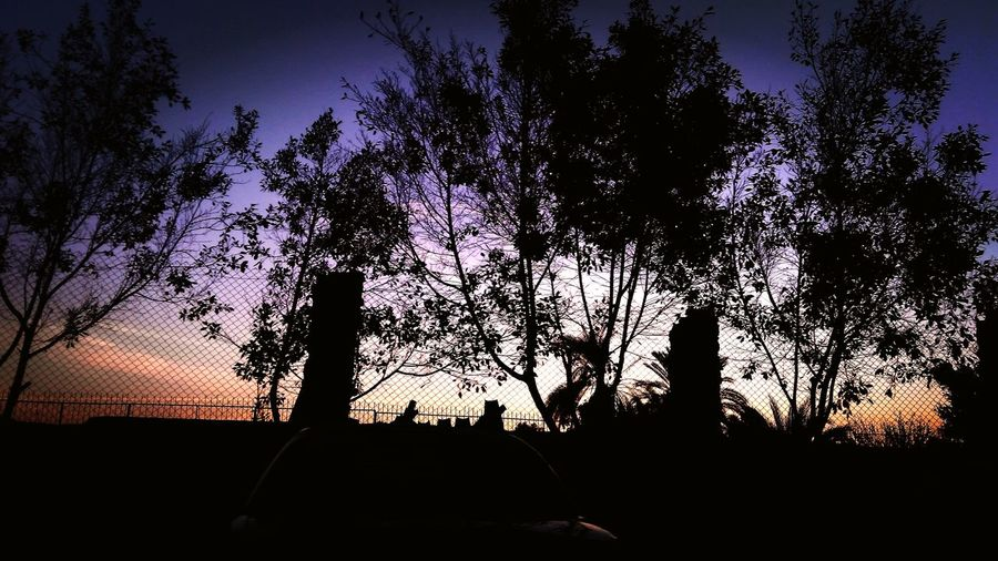 Silhouette Tree Sky Nature Sunset Outdoors No People Day Beauty In Nature Built Structure Clear Sky Streetphotography Architecture Cairo Egypt Egyptphotography Lifestyles Palm Tree Beauty In Nature Night Tree Area Pine Tree Nature Silhouette Travel Destinations Tree